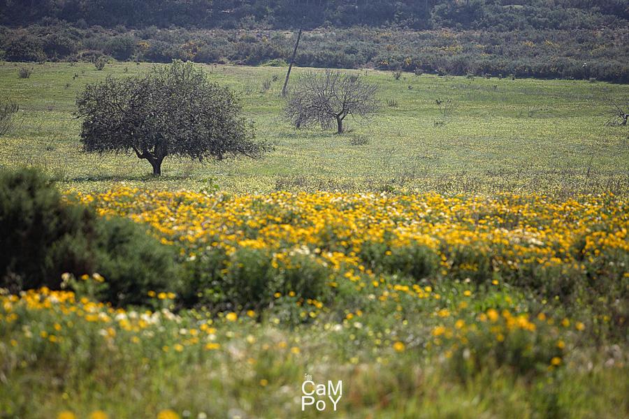 Fotoscampoy-fotografos-Murcia-15